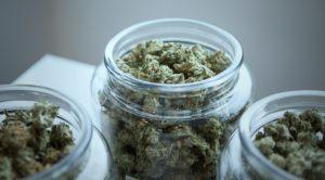 online cannabis platform